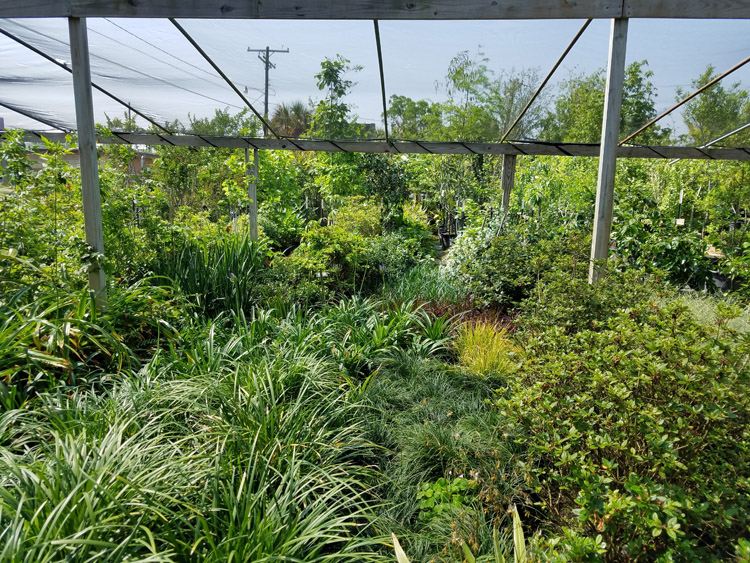 plants trees and shrubs for sale Beaumont Texas